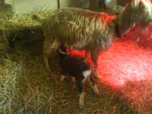 Birka nach der Geburt